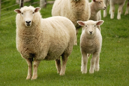 Wool Health Benefits