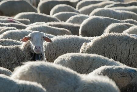 Avantages de la laine