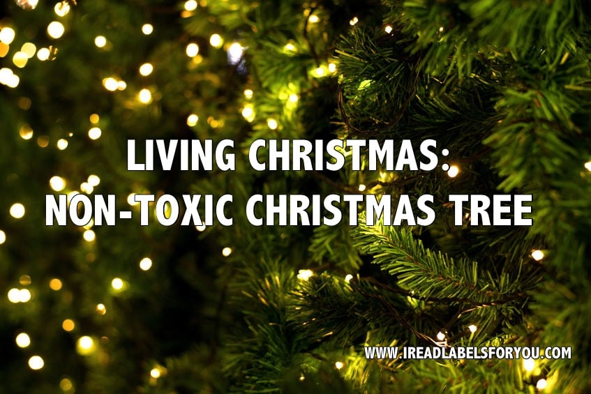 Non Toxic Christmas Tree I Read Labels For You