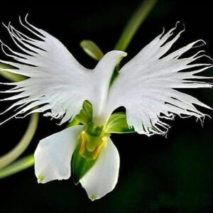 This is an #orchid! #beauty #environment