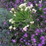 My front yard is blooming! organic flowers nature babyregistry gardenhellip