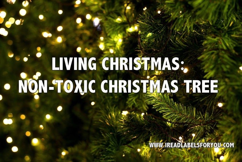 Living Christmas Tree.Non Toxic Christmas Tree I Read Labels For You